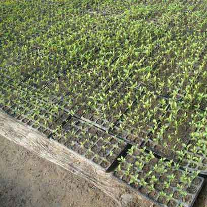 Wholesale Cheap Plastic Germinating Flats USA