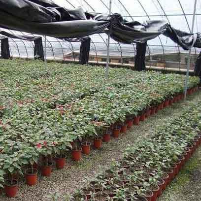 Cheap Large Plastic Potting Pots Wholesale Suppliers UAE