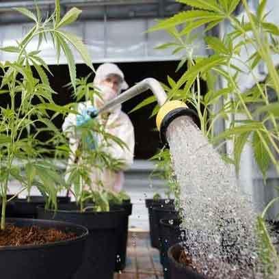 Plastic Cheap Large Plant Pots Wholesale Supplier