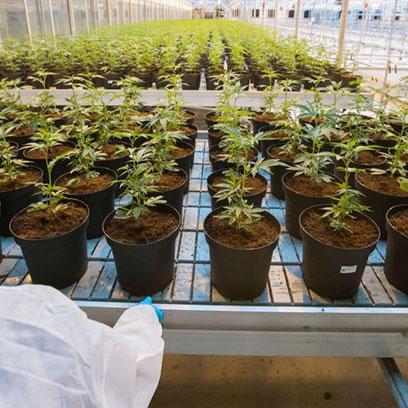 5 Gallon Plastic Growing Pots Wholesale Price