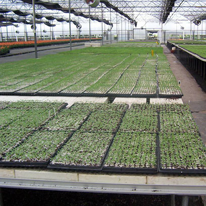 Cheap Plastic Shallow Plant Trays In Bulk