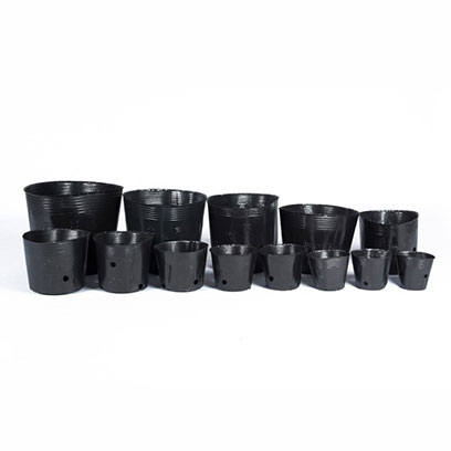 Plastic Pots For Ficus Trees Wholesale Supplier