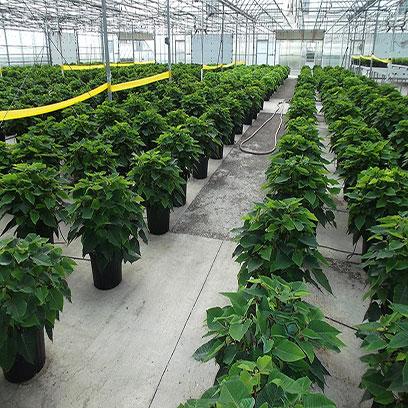 Cheap Black One Gallon Planter Pots In Bulk
