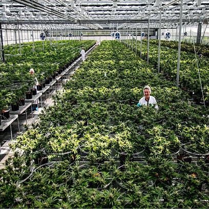 Cheap 18 Inch Plastic Planters Wholesale