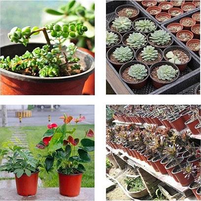 Plastic Garden Flower Pots Wholesale Supplier