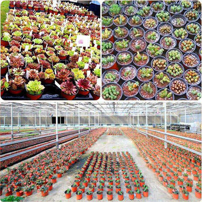 Small Plastic Nursery Plant Pots Wholesale Supplier