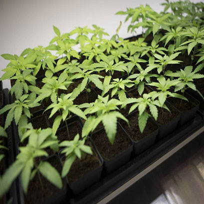3.5 Inch Square Plastic Succulent Pots In Bulk