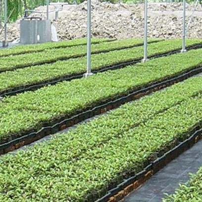 Shallow 72 Cell Farm Germination Trays