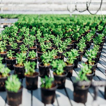 2 Gallon Plastic Nursery Plant Pots Wholesale Price