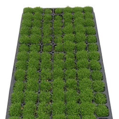 Cheap Shallow Plastic Germination Trays Manufacturer
