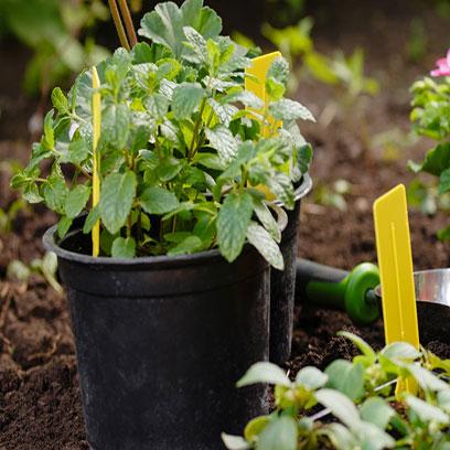 Black Plastic Garden Pots Online In Bulk