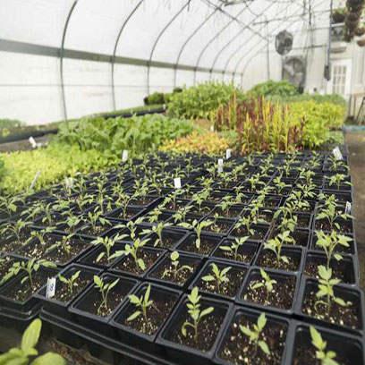 3.5 Inch Small Square Plastic Plant Pots