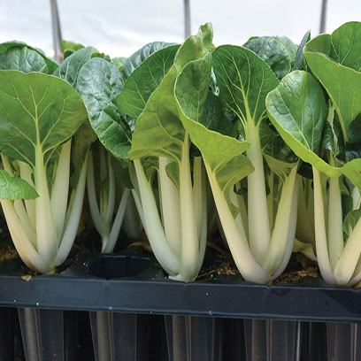 Greenhouse 128 Cell Sowing Plug Tray Wholesale