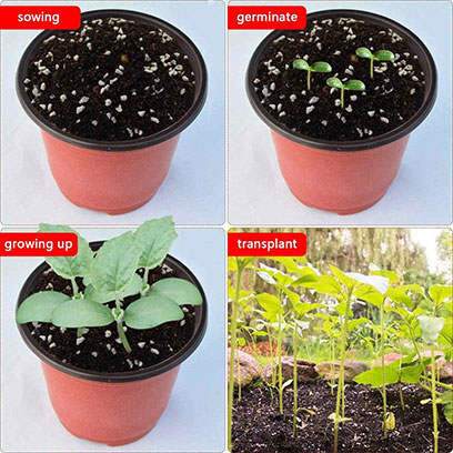 Cheap Small Commercial Plant Pots Plastic Manufacturers