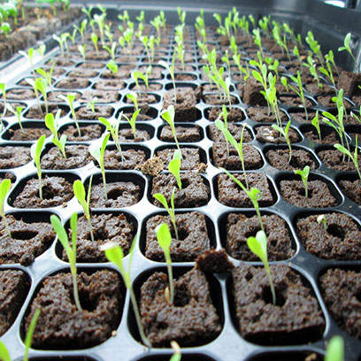 Greenhouse Nursery Plant Rootmaker Trays