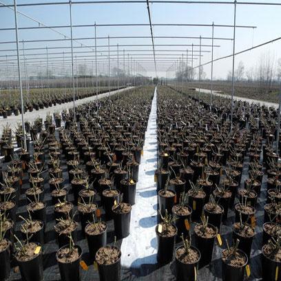 Wholesale Plastic Nursery Supplies Tree Pots
