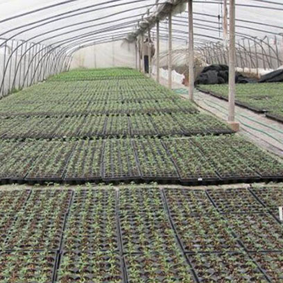 Plastic 128 Cell Planting Trays Wholesale