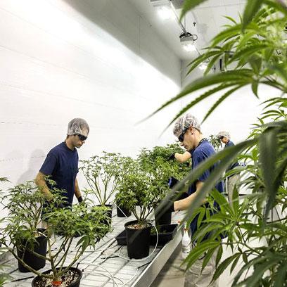 Plastic 2 Gallon Nursery Pots Bulk In Canada