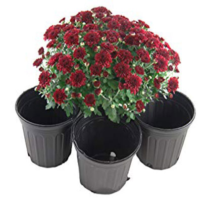 Small Black Plastic Nursery Flower Pots In Bulk