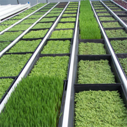 Wholesale 200 Cell Grass Plug Trays Canada