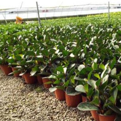 Large Plastic Terracotta Pots For Plants Online