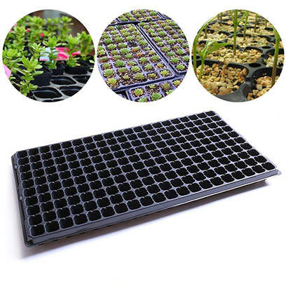 Lavender Germination Plug Trays Wholesale Canada