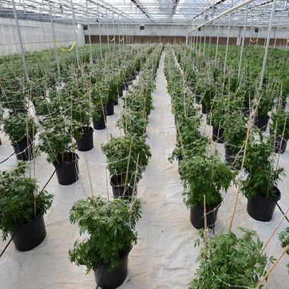 5 Gallon Plastic Nursery Planters Online