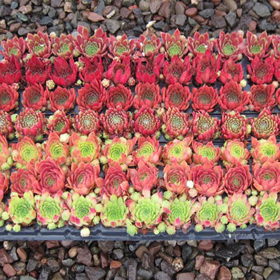 Succulent Soil Block Propagation Trays Canada