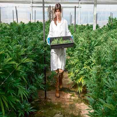 Large Hydroponic Trays For Sale Online