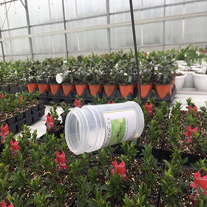 Mini Plastic Nursery Flower Pots Manufacturers Bangalore
