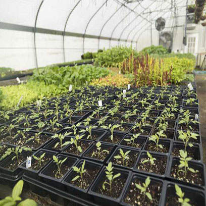 4 Inch Square Nursery Germination Pots