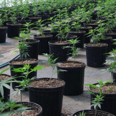 Plastic 20 Gallon Nursery Plant Pots For Sale