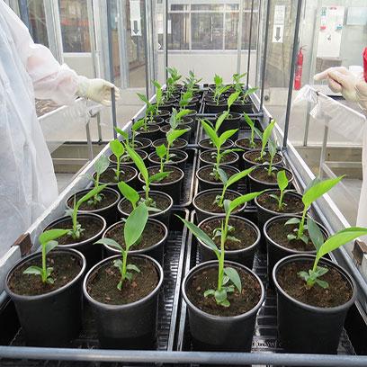 Small Black 1 Gallon Plastic Plant Pots Manufacturers