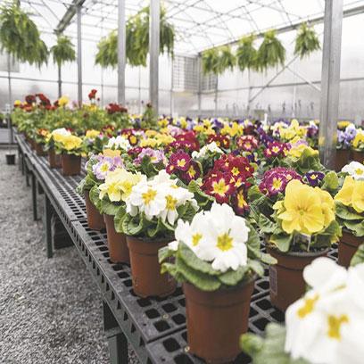 Teku 6 Inch Plastic Plant Pots Bulk Buy