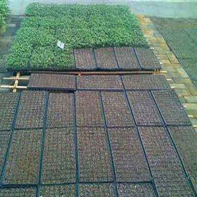 Plastic Cell Seedling Tray Manufacturers In Australia