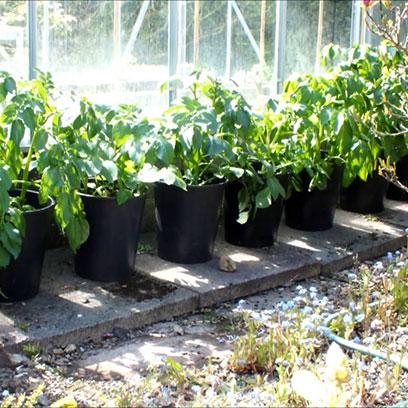 5 Gallon Plastic Nursery Growing Pots For Sale