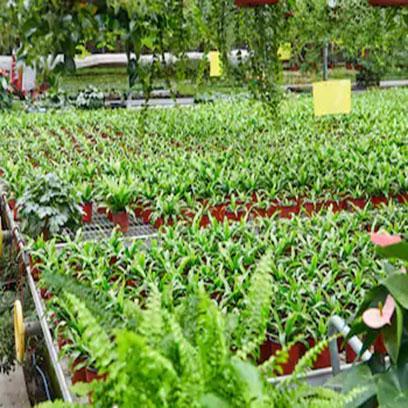 Mini Shallow Plastic Plant Pots For Sale UK