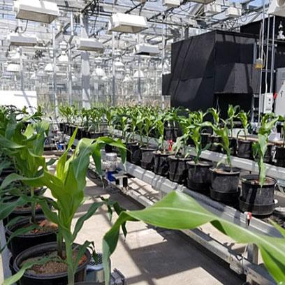 Large Black 18 Inch Plastic Plant Pots Suppliers