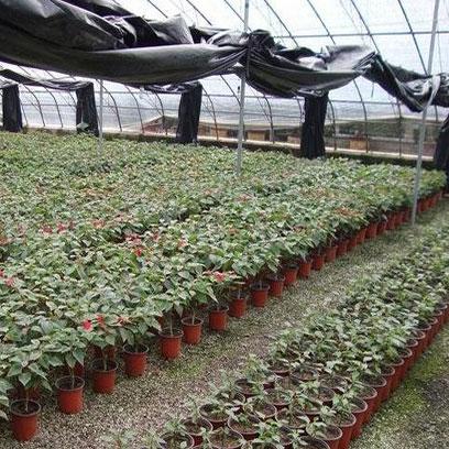 Greenhouse 27cm Large Plastic Terracotta Plant Pots