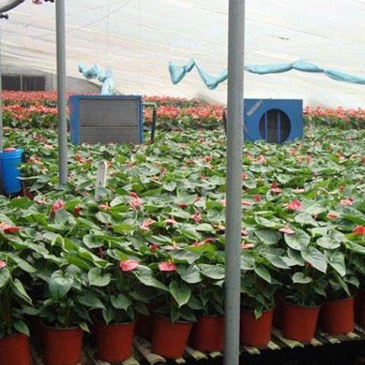 Buy Cheap 24cm Branded Plastic Plant Pots