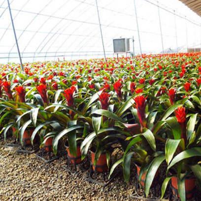 Wholesale Large Plastic Garden Pots Cheap UK