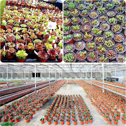 Greenhouse Plastic Gallon Planting Pots Wholesale
