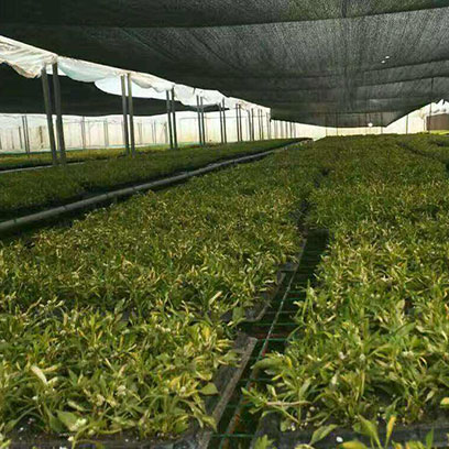 50 Cell Seedling Plug Trays Manufacturers Spain