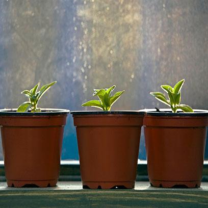 Greenhouse 4 Inch Plastic Plant Pots Bulk Buy