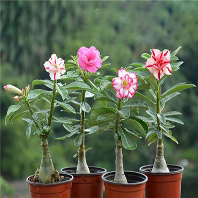 Cheap Mini Plastic Flower Pots Wholesale Supplier