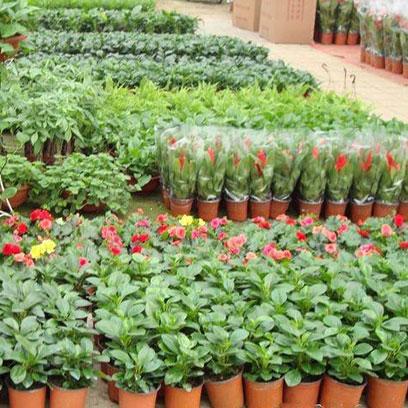 16 cm Terracotta Plastic Plant Pots In Bulk