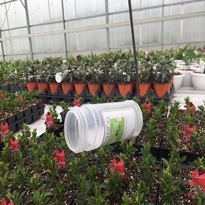 Teku 15 cm Plastic Plant Pots Wholesale