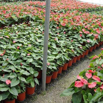 Cheap 14 cm Plastic Plant Pots Manufacturer