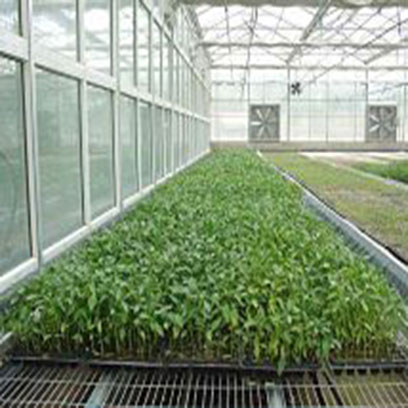 Bulk Buy Cheap Greenhouse Plant Trays Plastic