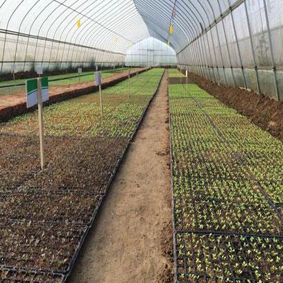 Cheap Plastic Farm Tray Wholesale Supplier